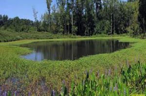 swamp and wetland assessment management park